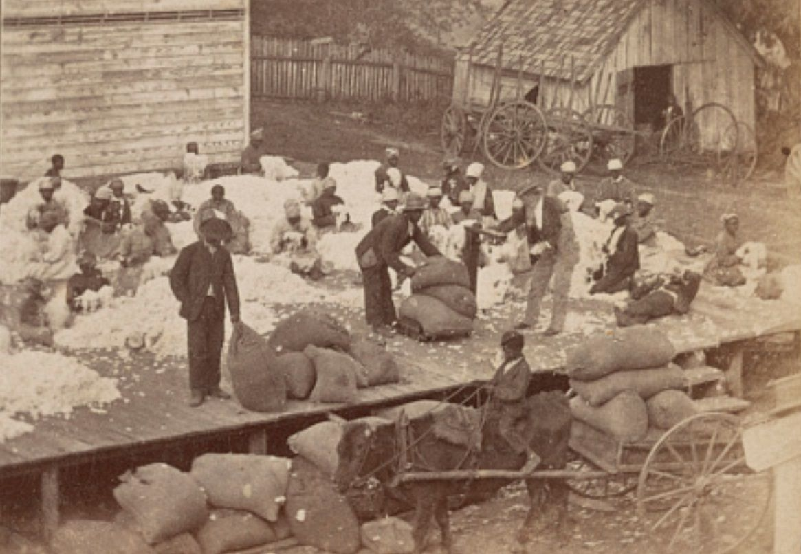 n plantation preparing cotton.jpg
